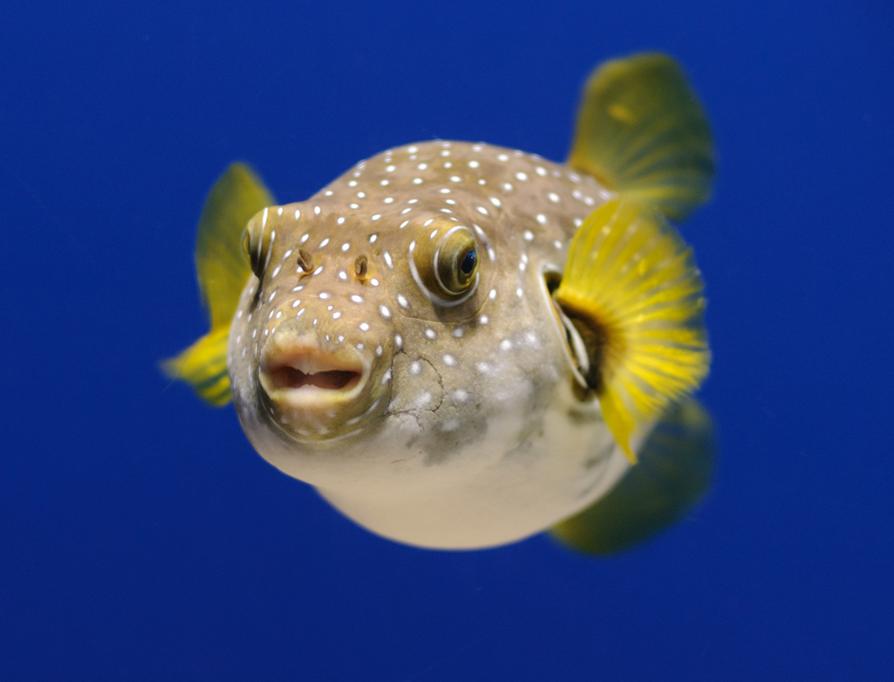 Об убеждениях и рыбах